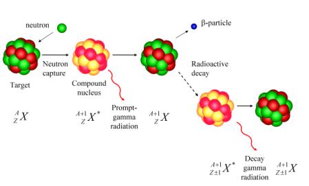Neutron Activation